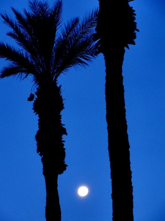 thousand palms guys Concrete pavers thousand palms, ca has the best concrete pavers prices in thousand palms, ca call now 888-344-7299 get a quote now  at concrete paver guys,.