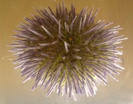 DSC06070