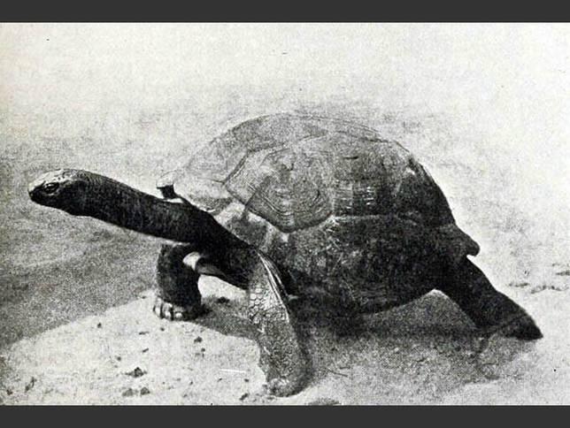 20120720-seychelles-giant-tortoise.jpg.644x0_q70_crop-smart